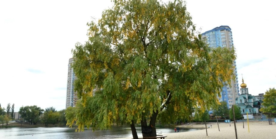 """""""Дерево Цоя"""". Фото: 112.ua"""