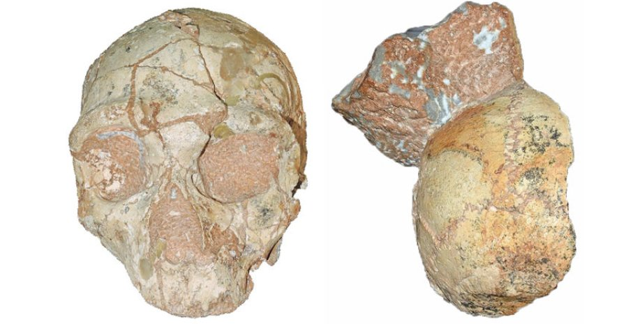 Череп неандертальца (слева) и фрагмент черепа человека современного типа. Katerina Harvati, Eberhard Karls/University of Tübingen