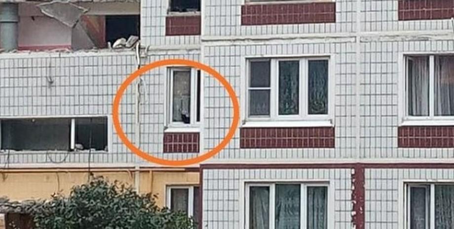 Ногинск, дом, кошка,