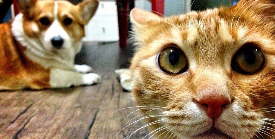 кошка, собака, пол, фото
