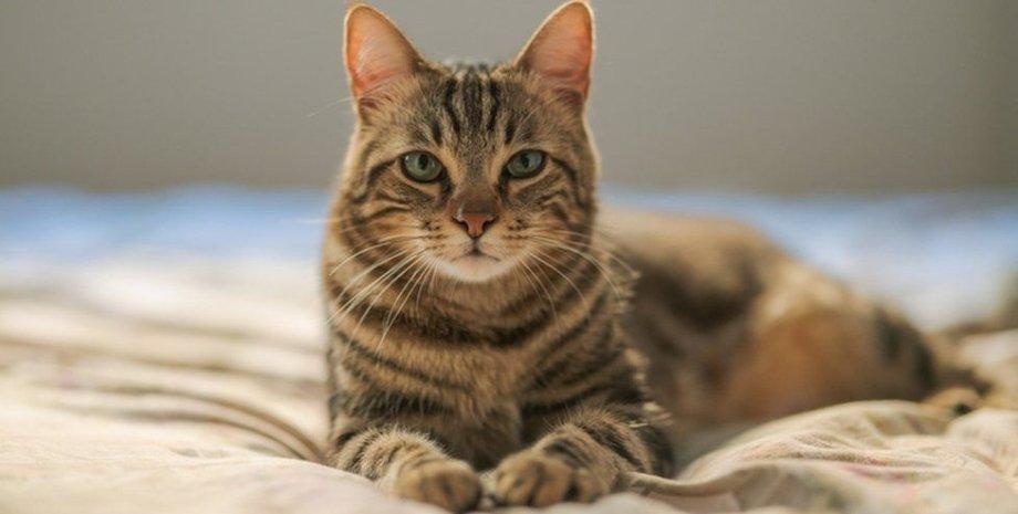 кішка одна на час, постільна, фото