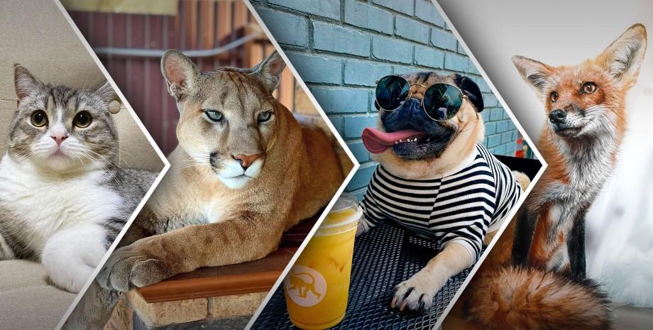 популярные животные 2021, животные блогеры