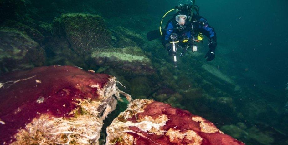 мікроби, океан, дно, фото, аквалангіст