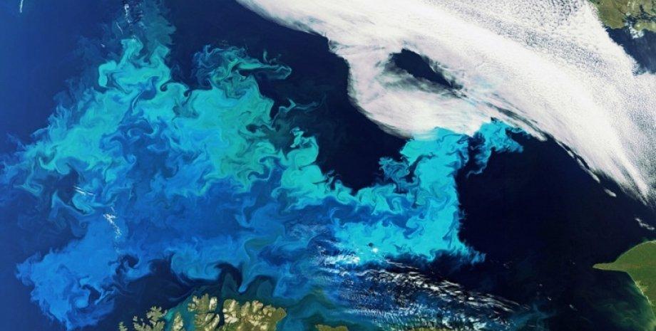 цветение воды, фитопланктон, океан, пожары