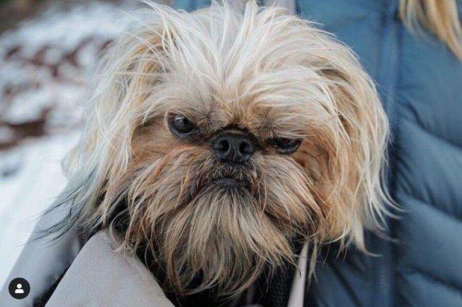 сердитый пес, Бучи, мем